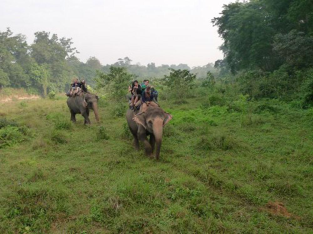 Ritt auf den Elefanten
